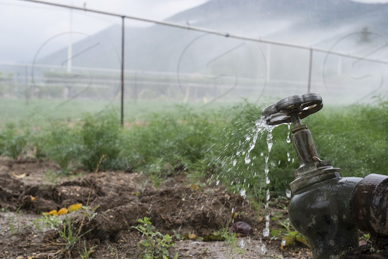 Agriculture pipes and tap water for watering plants photo