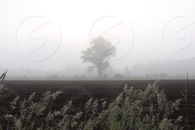 Fog on the farm Hadley Massachusetts photo