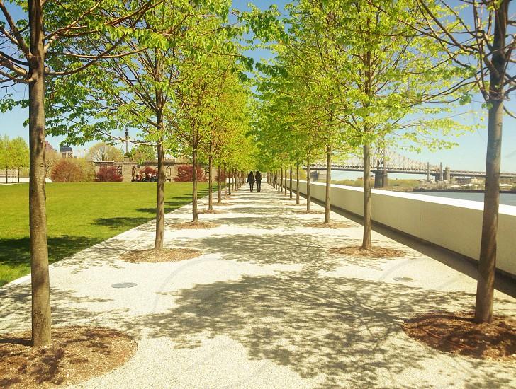 green trees  photo