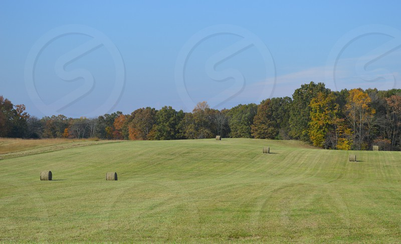hay bales on green rolling grass fields bordered by green yellow red deciduous trees photo