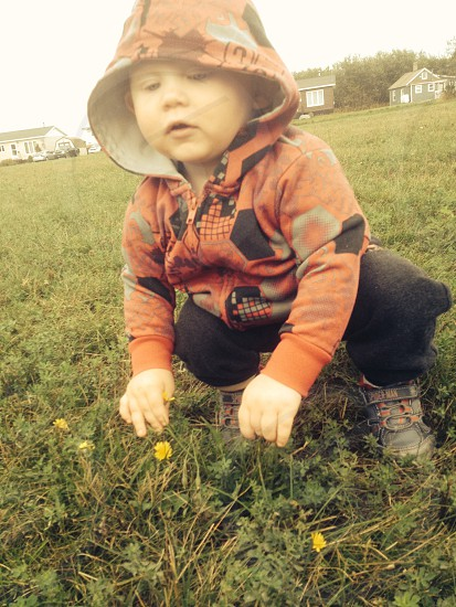 Little boy picking flowers🌼 photo