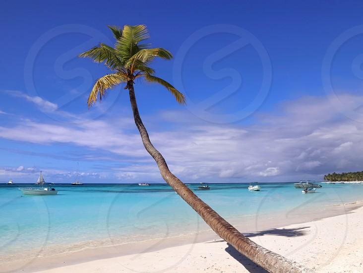 Palm beach sea ocean summer sky sea sand vacation island Caribbean blue  photo