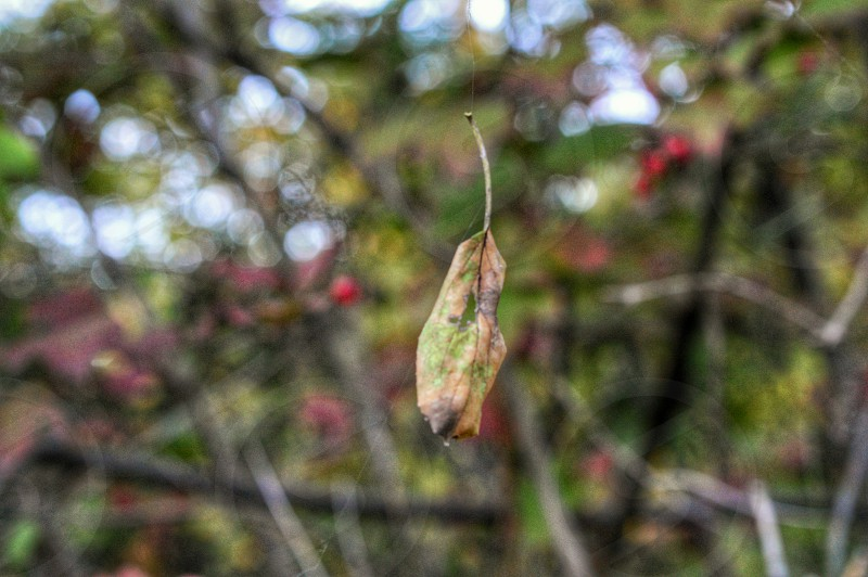 autumn fall in homewood illinois leaf suspended nature photo