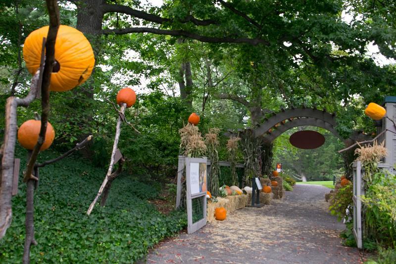jack-o-lantern themed hallway during daytime photo