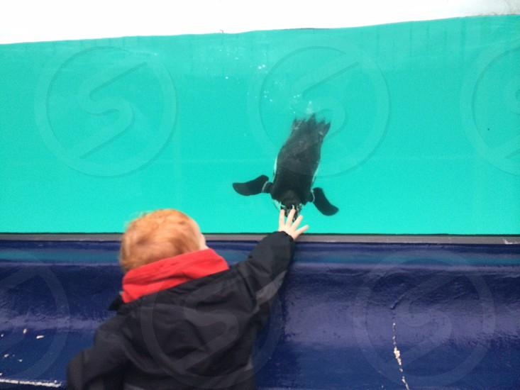 boy wearing black jacket standing in front of big aquarium with penguin photo