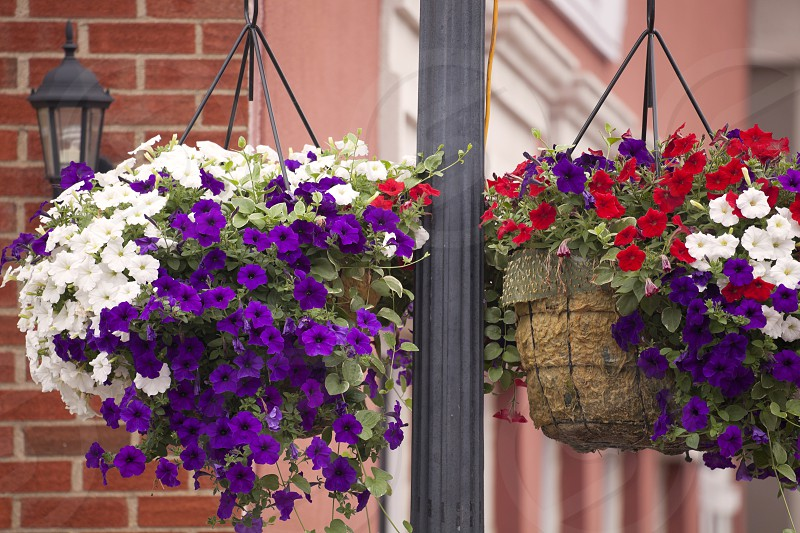 Two Hanging Planters photo