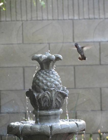 Hummingbird water fountain  photo