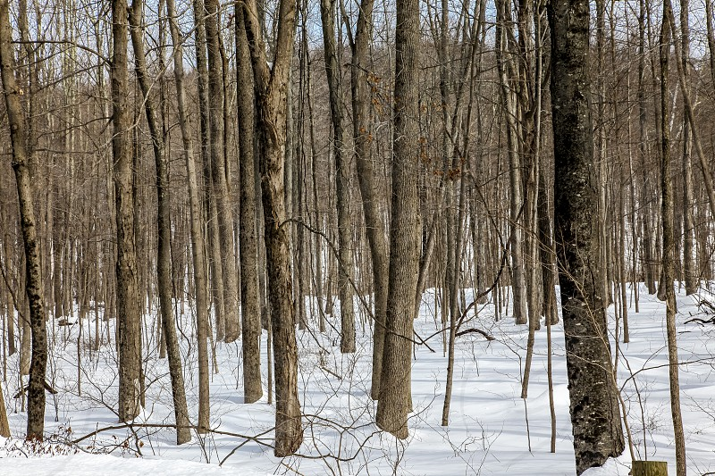 brown bare trees on white snow during daytime photo