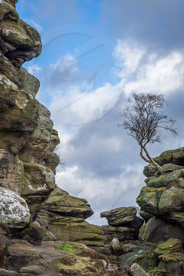 Lone tree on rock outcrop at historical Brimham Rocks on Brimham Moor near Pateley Bridge in Yorkshire photo
