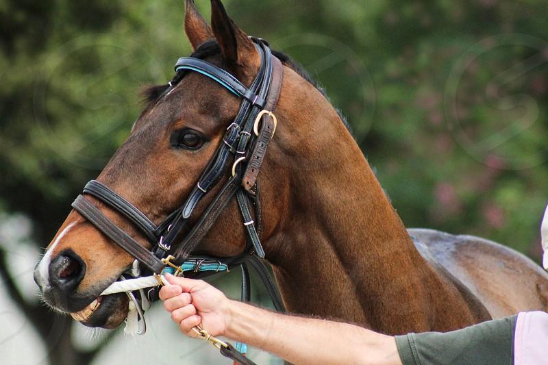 Race horse equine rider horseback riding jockey competition industry thoroughbred mate mane stallion racing mask bridle bit  photo