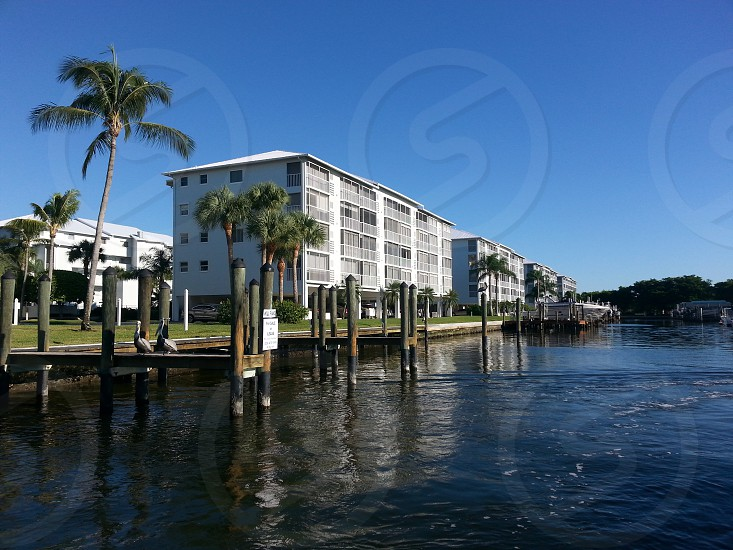 waterfont palm trees condos condominiums Fort Myers Florida  photo