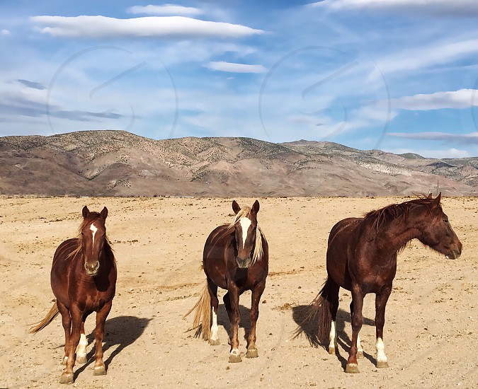 Horse field desert threehorses nature beauty Animals posing epic mountain meadow wild  photo