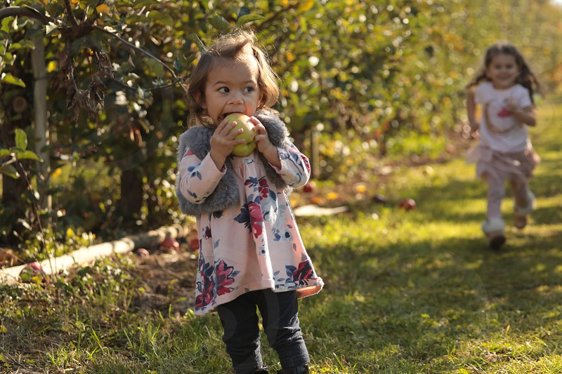 Little girls playing in an orchard. photo
