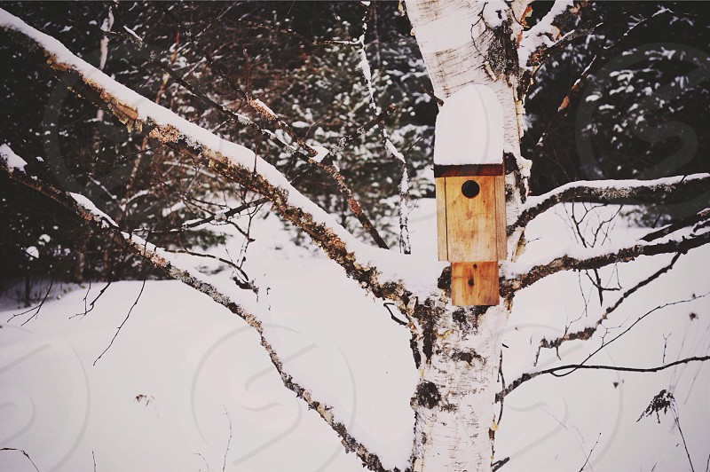 brown wooden bird house photo