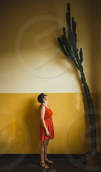 an indoor shot of a young woman bathed in natural light smiling up at a looming cactus plant photo