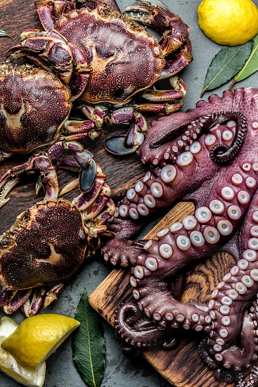 Seafood octopus. Whole fresh raw octopus and crabs on wooden board with lemon and laurel gray slate background top view. photo