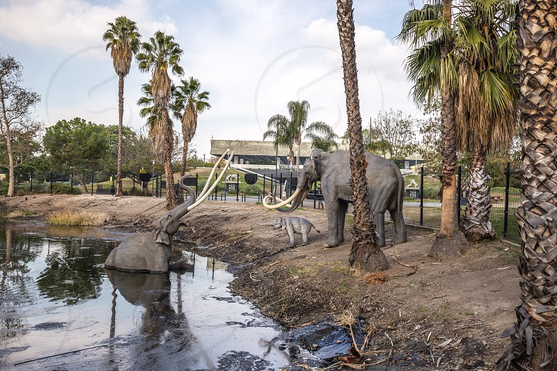 La Brea Tar Pits in Los Angeles CA photo