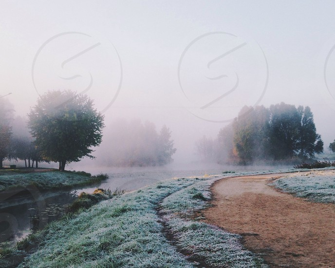 foggy trees around a river with a winding dirt road photo