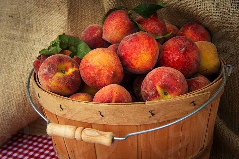 A wooden basket filled with ripe peaches photo