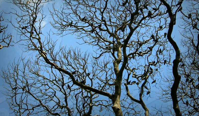 open sky and dried tree photo