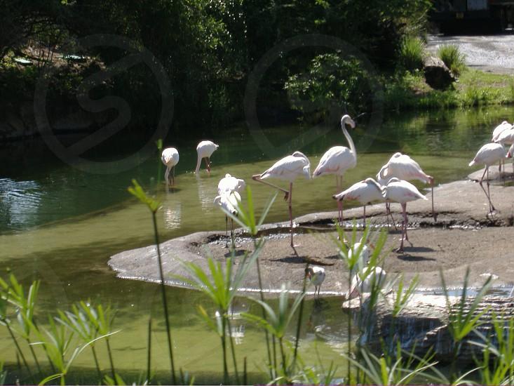 white cranes on river bank photo