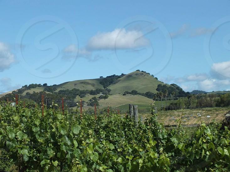 LandscapeNapa Valley photo