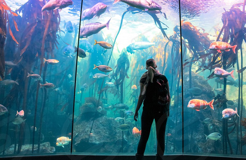 A girl at the aquarium. photo
