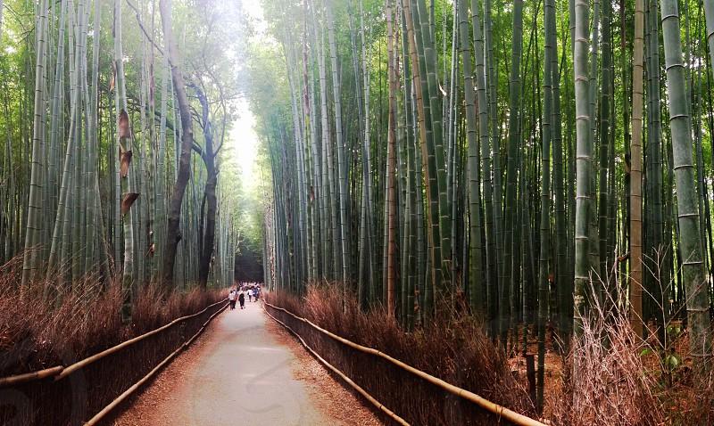 arashiyama. photo