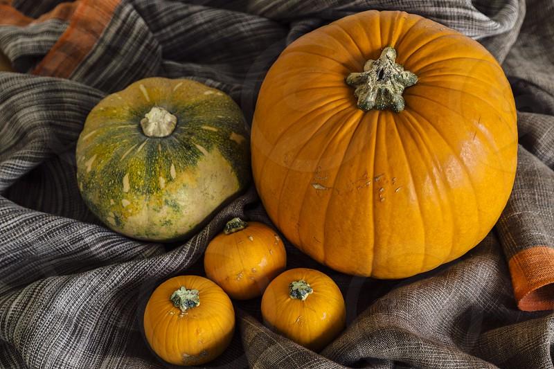 pumpkins squashes pumpkin still life arrangement autumn fall harvest halloween hallowe'en thanksgiving overhead photo