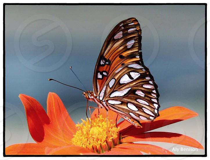 Butterflies flower photo