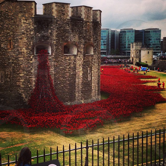 Poppies being installed at Tower of London photo