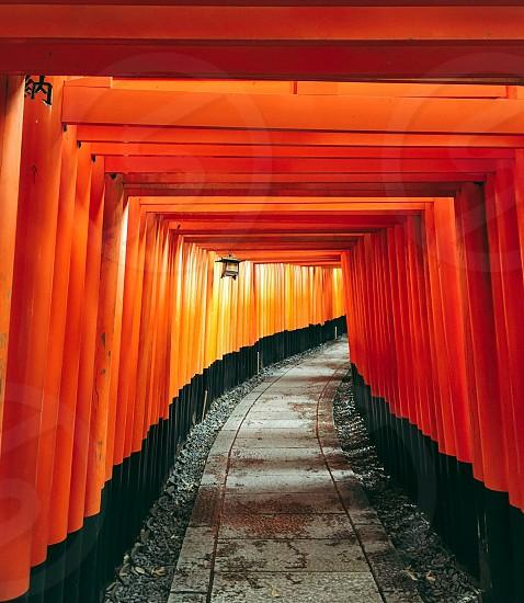 Fushimi Inari  photo
