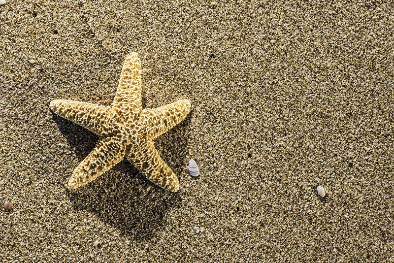 Sunrise on the beach. Starfish photo