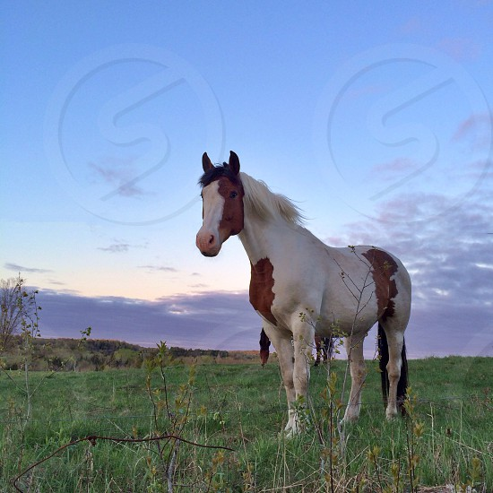 white and red wild horse photo