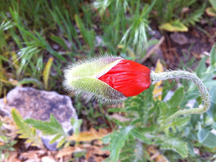 red and green flower photo