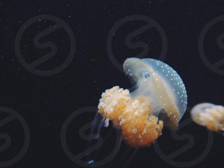 Jelly fish photo