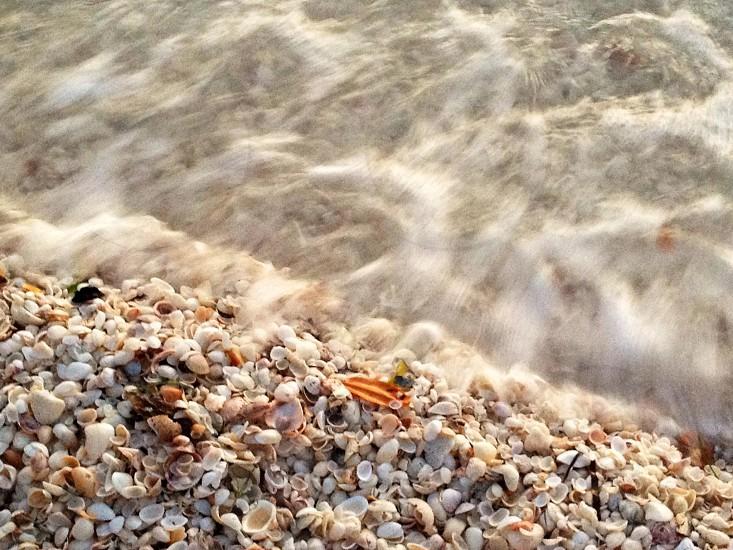 Sea Shells on Sanibel photo