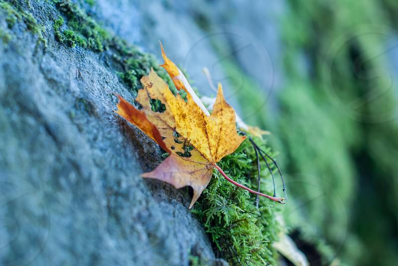 Leaf Autumn Fall Nature photo