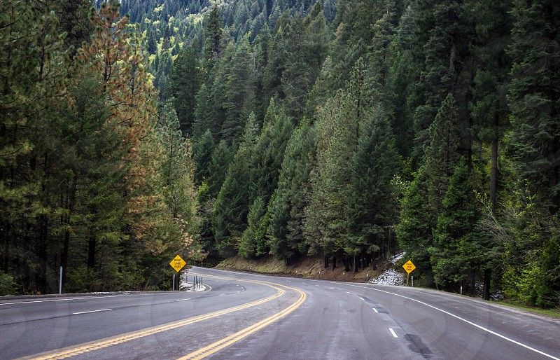 Green beauty on my way to Lake Tahoe. California. Trees road pines daytime.  photo