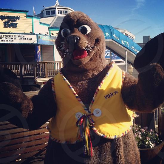 San Francisco Aquarium Otter photo