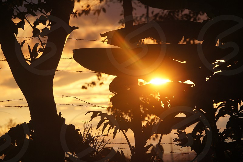 silhouette of trees and plant at golden hour photo
