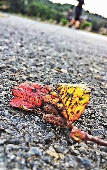 closeup photography of red and yellow leaf on black concrete pavement photo