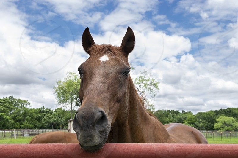 Closeup of a brown horse with a white star on its forehead looking over a red orange metal pipe fence surrounding the pasture of a ranch on a mostly cloudy summer afternoon. photo