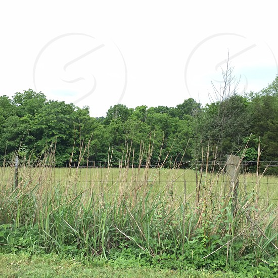 Horton Lane Franklin TN; green grass; weeds; field; trees; Spring; fence photo