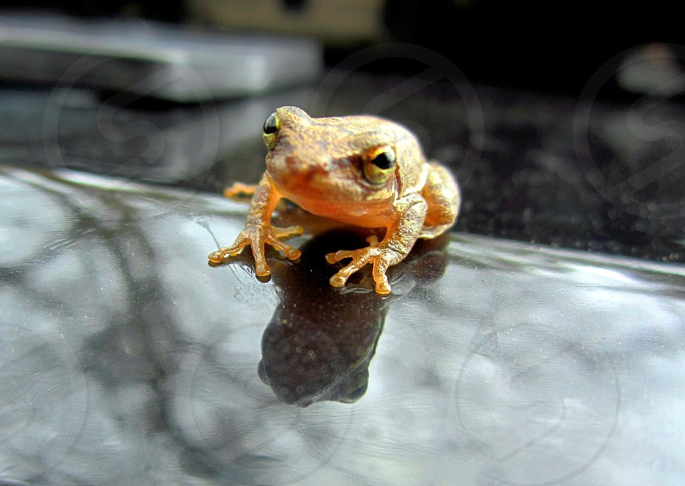 Froggy photo