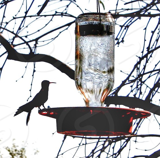 clear and red bird feeder photo