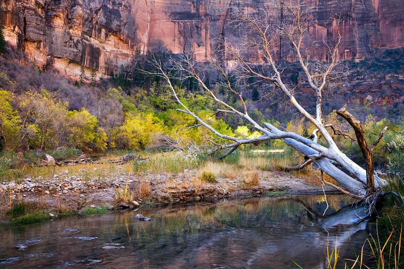 Dead Tree in the Virgin River photo
