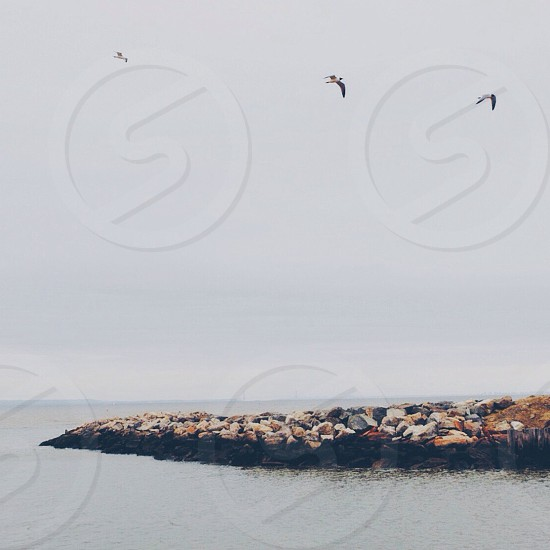 birds flying over body of water photo