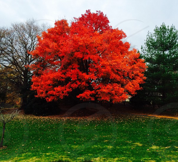 Unfiltered autumn fall maple tree leaves nature photo