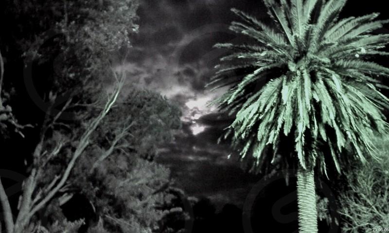 Moon shine Trees photo